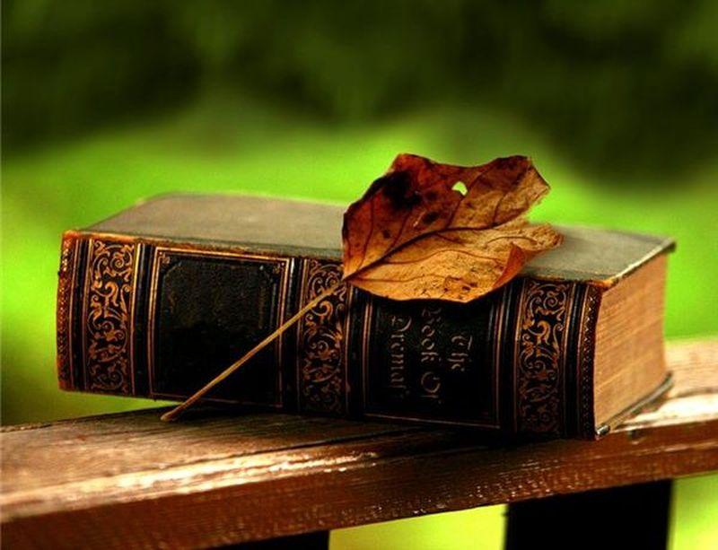 Всемирный день книг